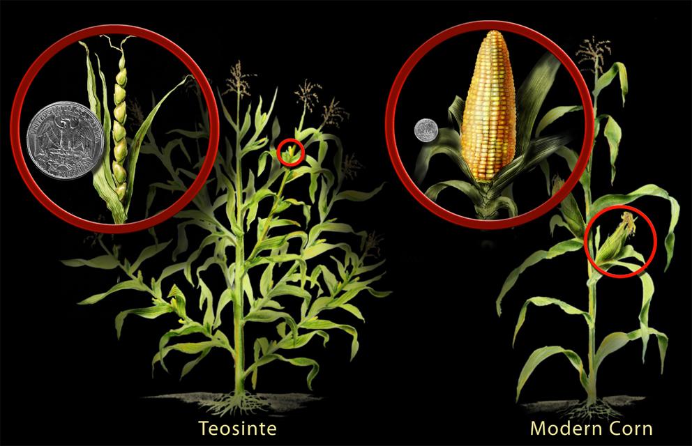 evolucia-rastlin-1