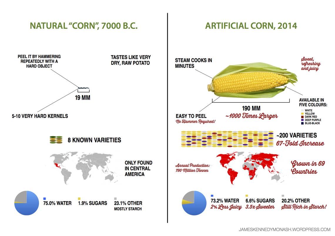 evolucia-rastlin-kukurica