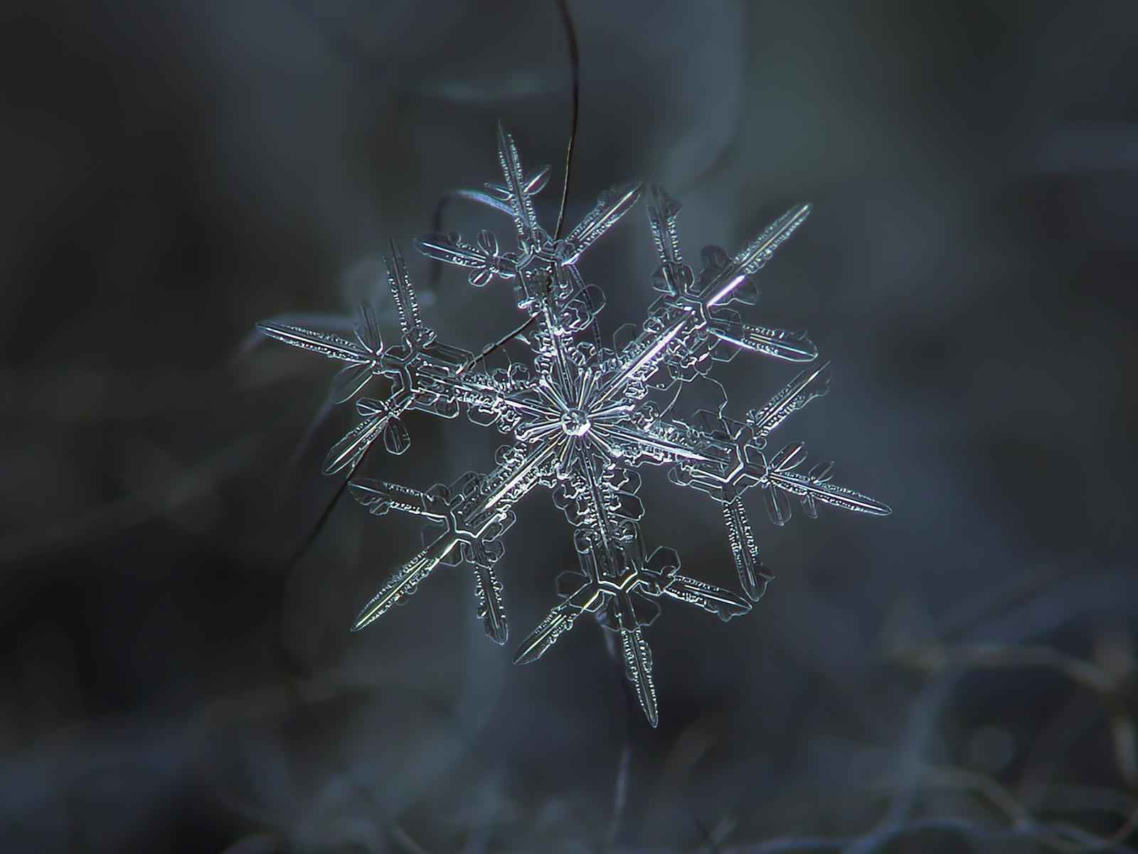 vlocky-03-Hviezdne-Dendrites2